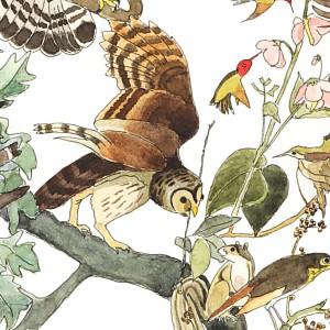 El árbol de Audubon